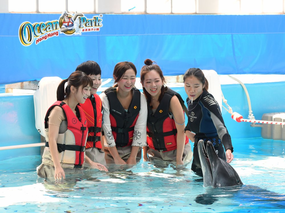 香港旅行 ▌香港海洋公園 與動物親上加親:豚聚一刻  近距離接觸可愛的海豚 讓人融化