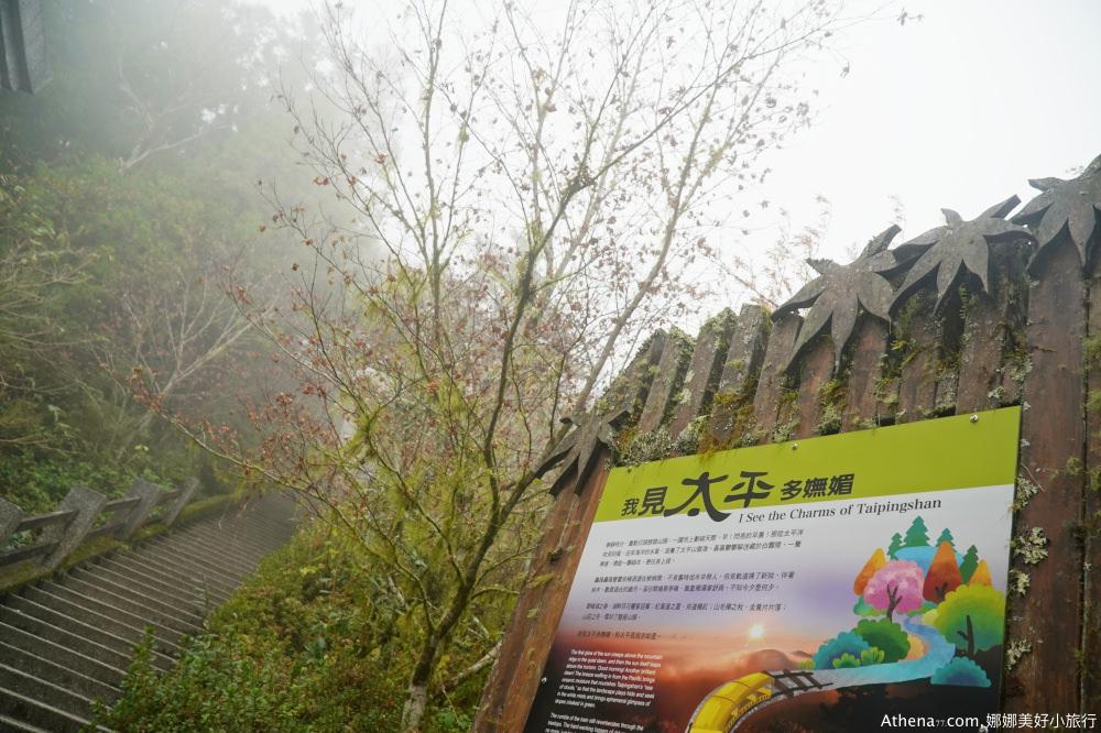 宜蘭太平山一日遊心得 太平山森林步道森呼吸,原始森林一日遊