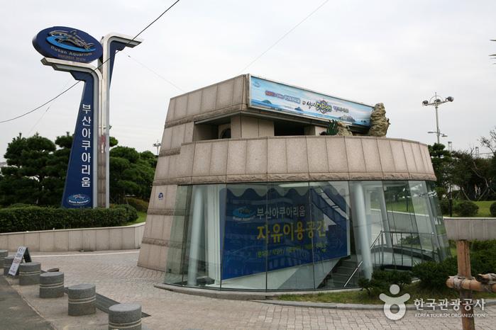 釜山水族館 (부산아쿠아리움)