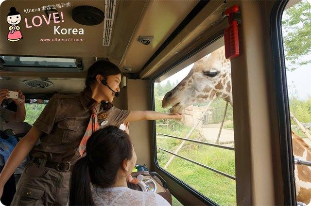 韓國 ▌京畿道景點。愛寶樂園에버랜드 跟可愛的大熊說嗨/LOST VALLY必玩