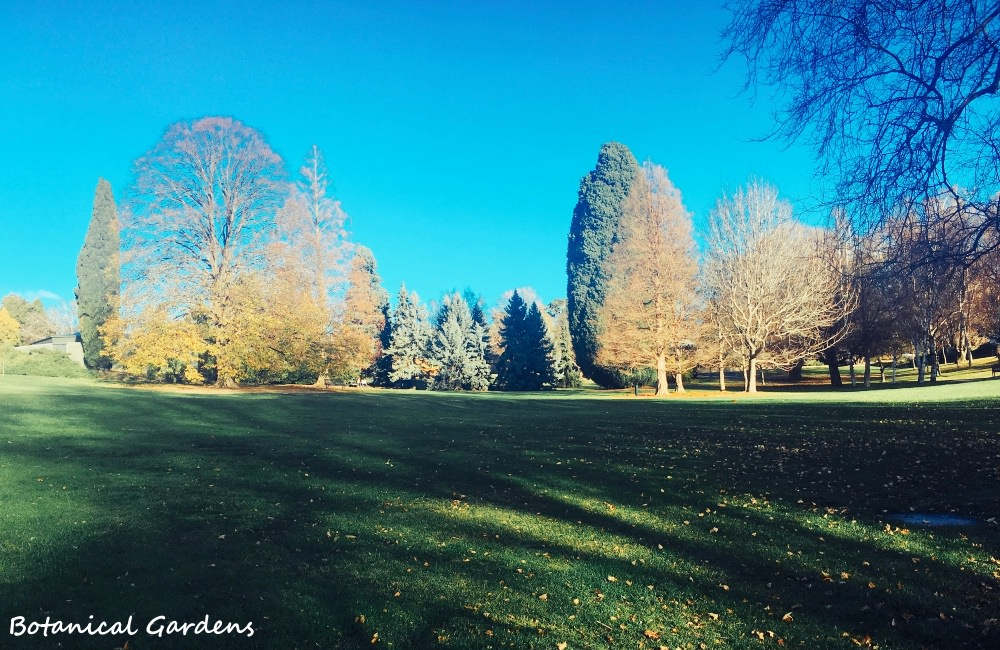 澳洲 ▌塔斯馬尼亞 皇家植物園 Royal Tasmanian Botanical Gardens《MAE專欄》